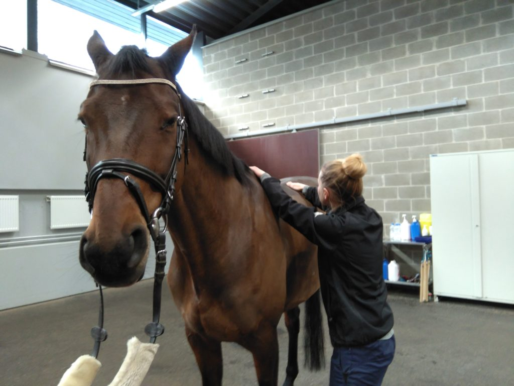 Ontumatutkimus hevoselle